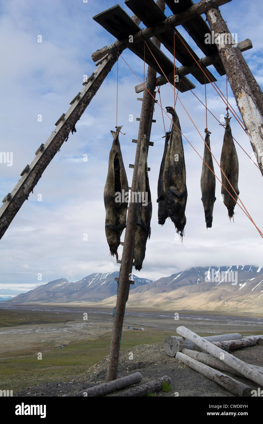 Seal meat drying, Longyearbyen, Spitsbergen, Svalbard, Arctic - Stock Image