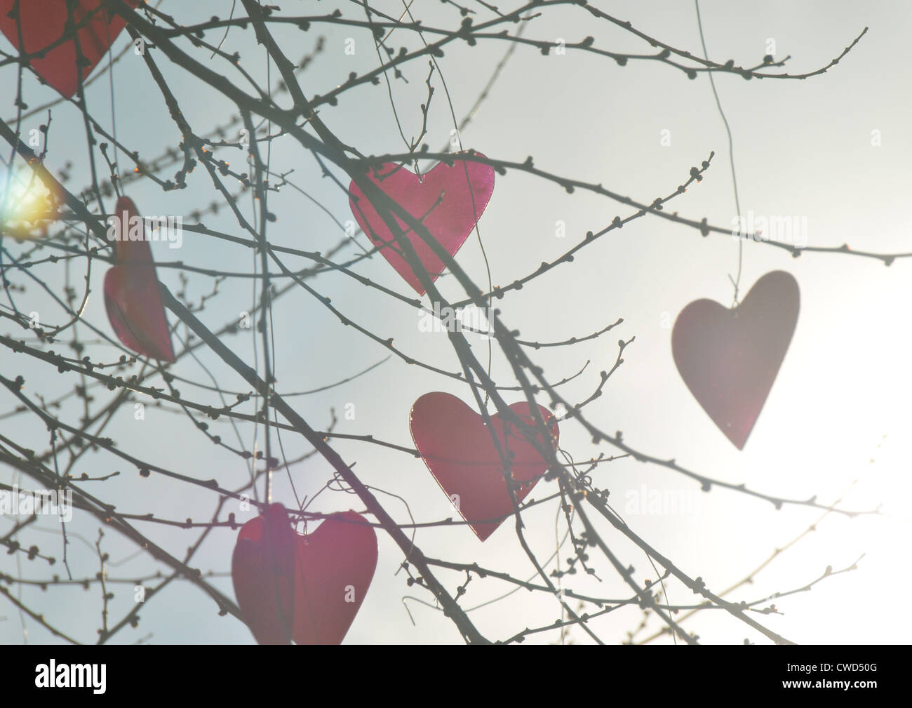 twig,heart,baubles - Stock Image