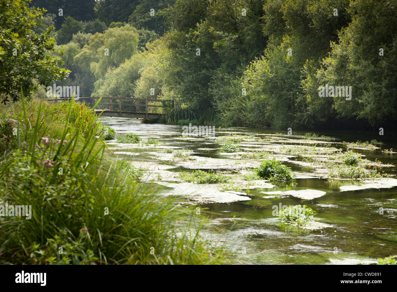 river weed and wooden footbridge over tree lined River Itchen - Stock Image