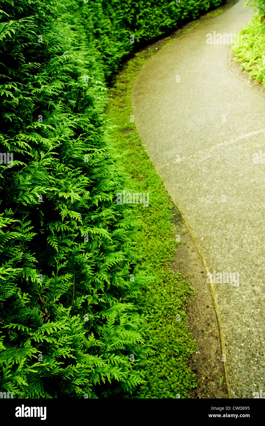 hedge,curved,park path - Stock Image