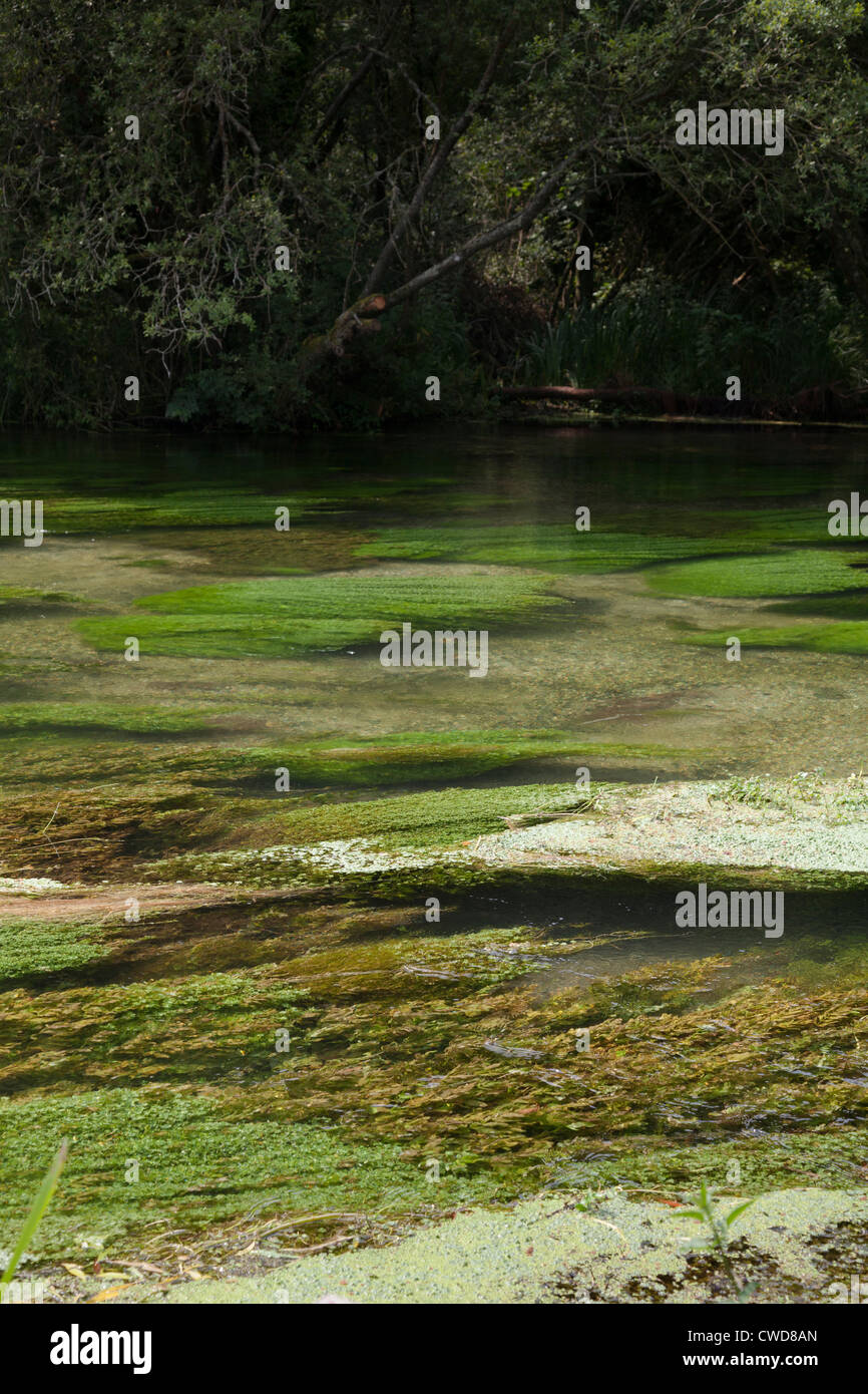 river weed in clear waters of River Itchen - Stock Image