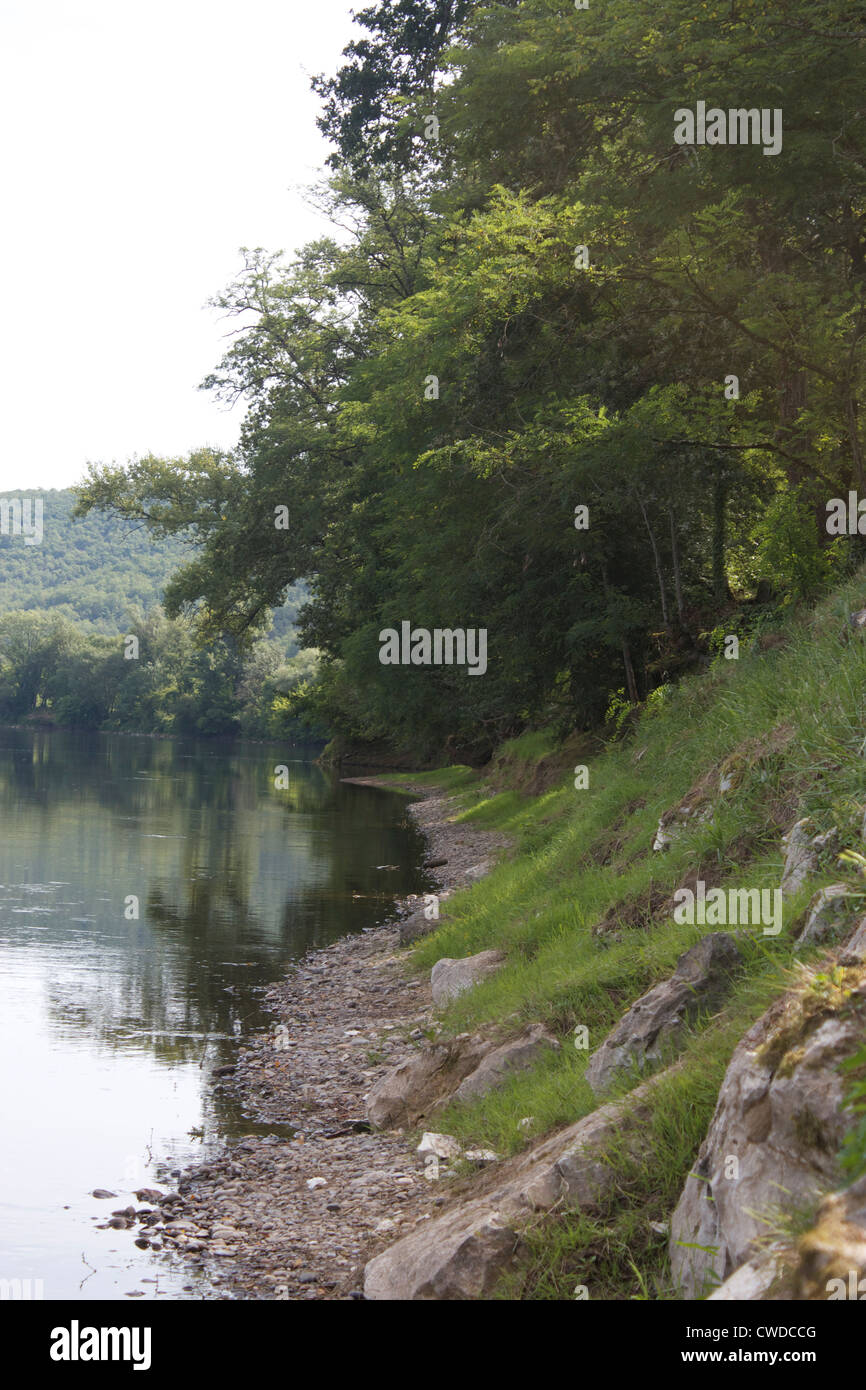 Trees on riverbank - Stock Image