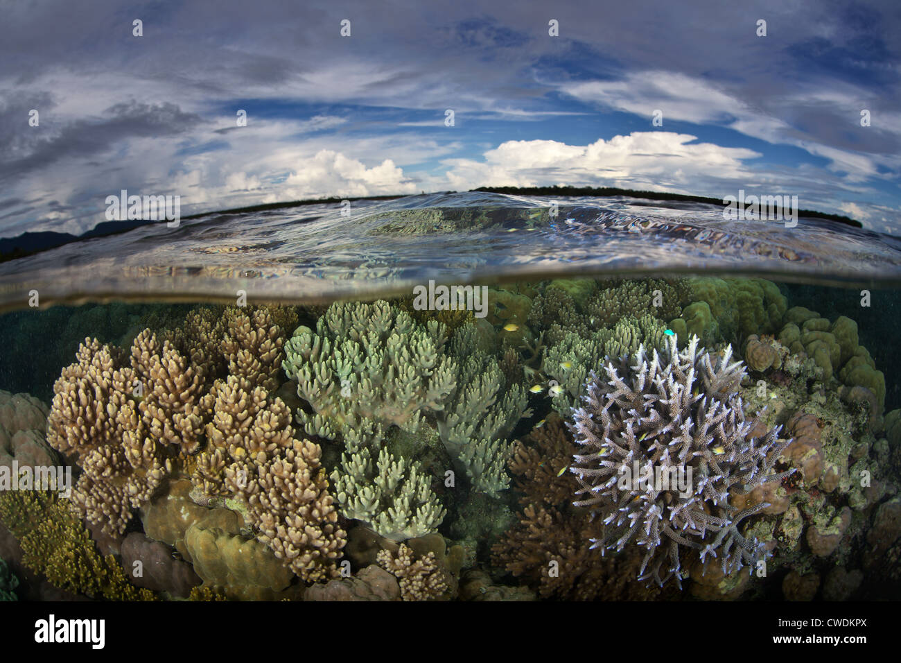 A diverse coral reef grows just under the waterline near a remote village in the Russell Islands, part of the Solomon - Stock Image