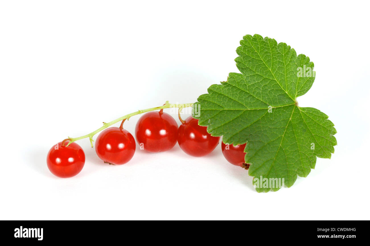 Redcurrant on the withe background Stock Photo