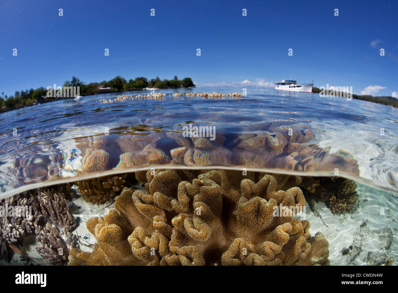 A liveaboard ship has anchored near a shallow coral reef where soft leather corals, Sarcophyton sp., grow. - Stock Image