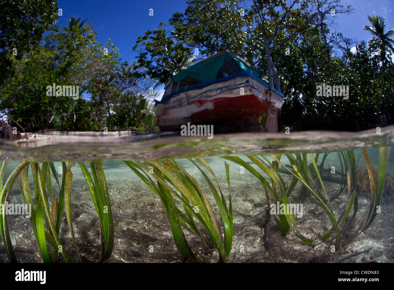 Seagrass, Enhalus acaroides, grows close to the edge of a beach and mangrove forest where a ship has been beached. - Stock Image