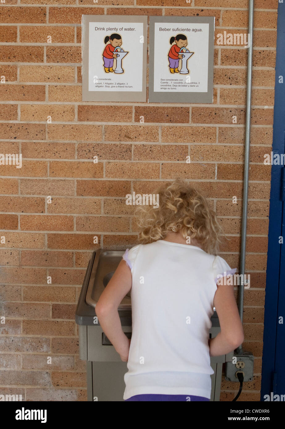 7 year old white girl uses water fountain at elementary school in Austin, Texas above bilingual sign instructing - Stock Image