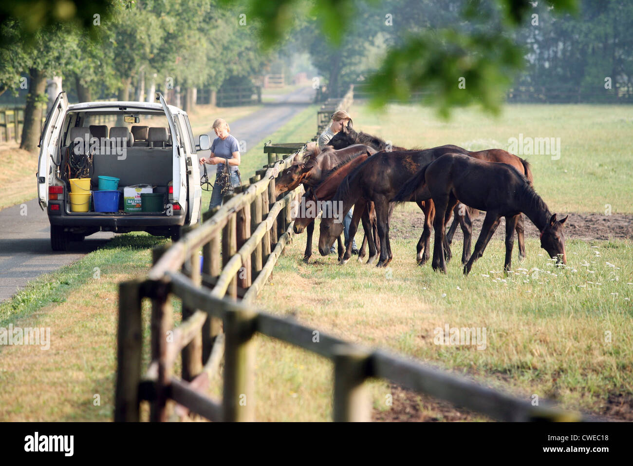 Sottrum-Fährhof, food is moved to the paddock - Stock Image