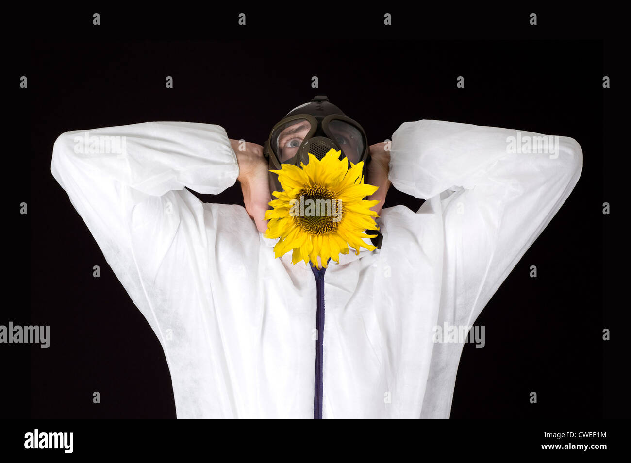fear,sunflower,gas mask - Stock Image