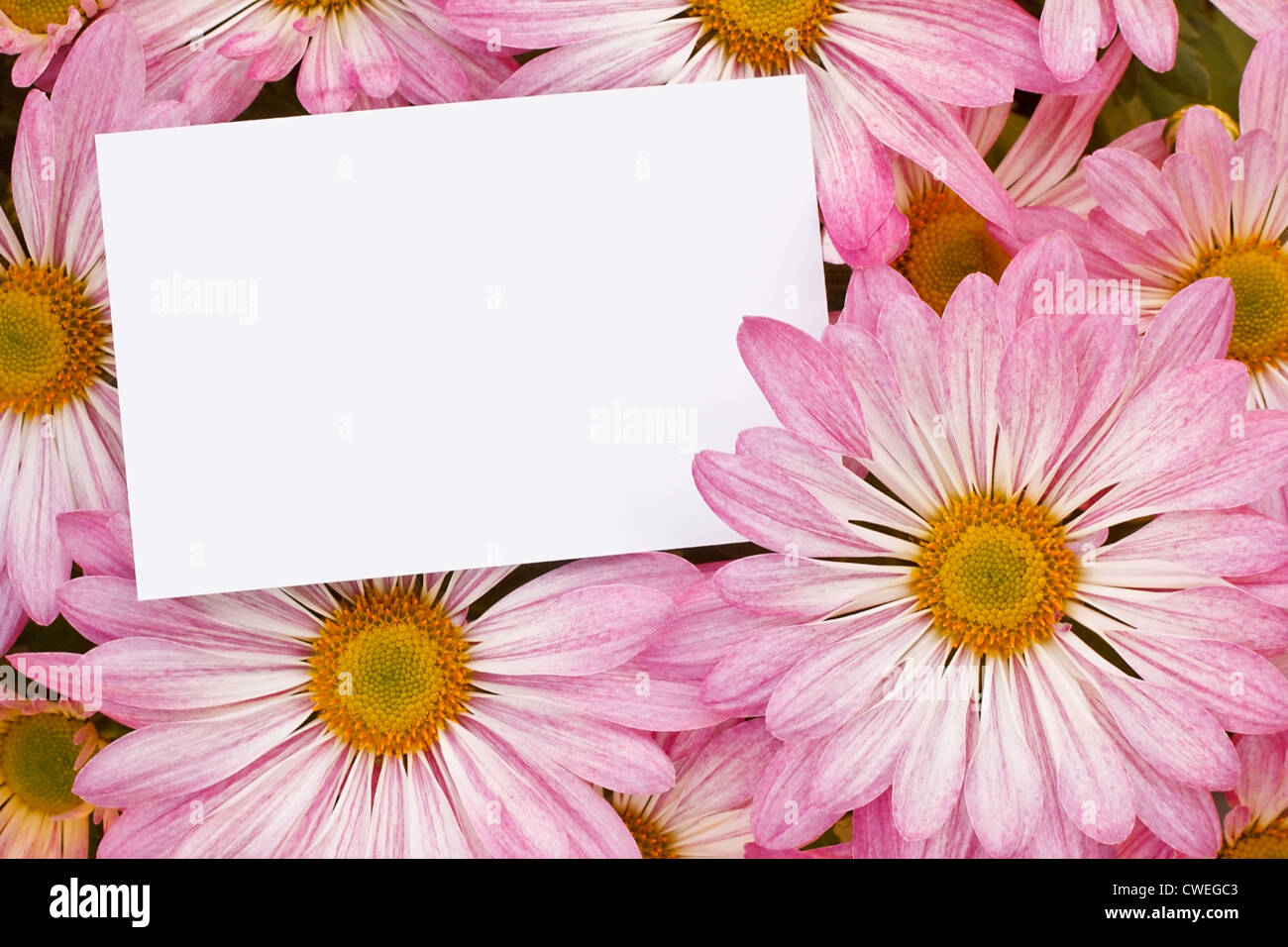 Bouquet blank tag card stock photos bouquet blank tag card stock pink chrysanthemum floral bouquet background with blank greeting tag to insert your marketing message or florists izmirmasajfo