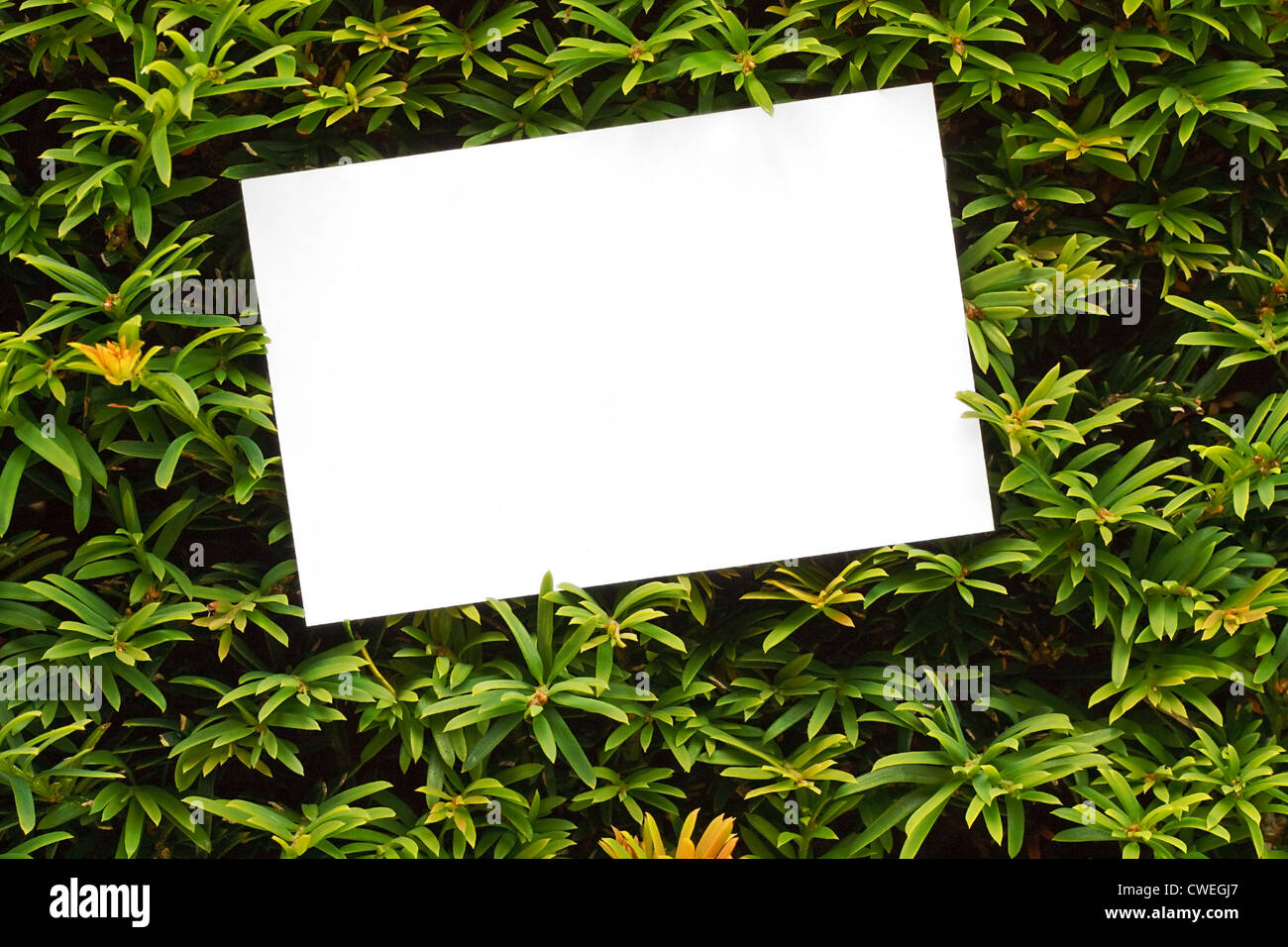 Topiary bush frame or hedge border good for country houses, stately homes, Garden centres or landscape designers - Stock Image