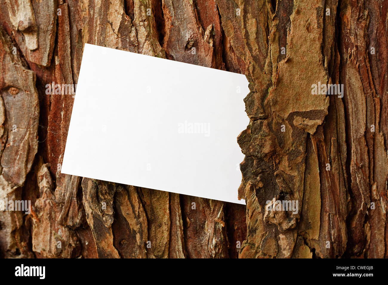 Tree Bark frame border with copy space - Stock Image