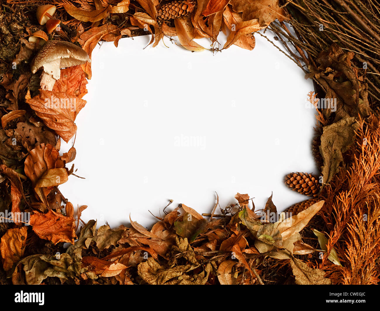 Autumn seasonal border with golden orange leaves a great rustic fall frame - Stock Image