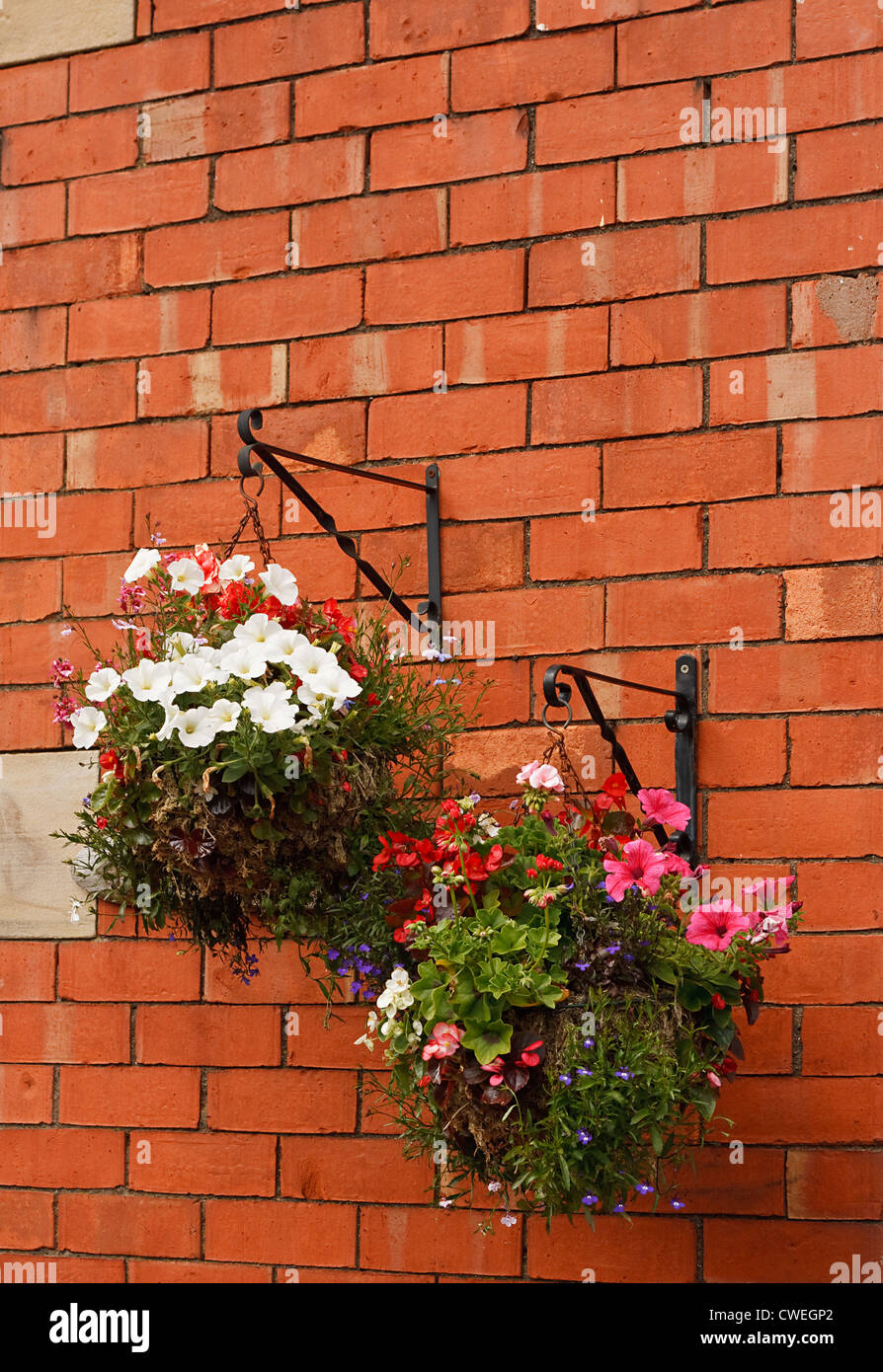 Hanging baskets overflow with flowers bracketed on a traditional red brick wall - Stock Image