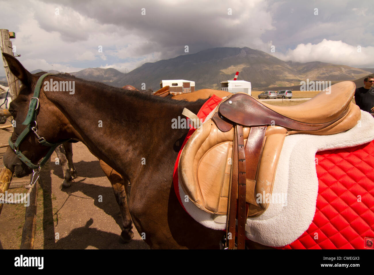 saddle on horse at riding stables in Castelluccio in Italy - Stock Image