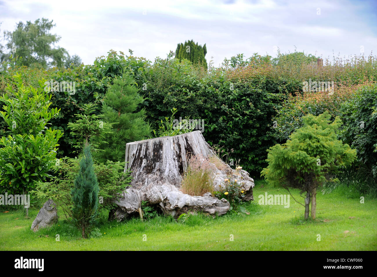 A tree stump in a garden England UK - Stock Image