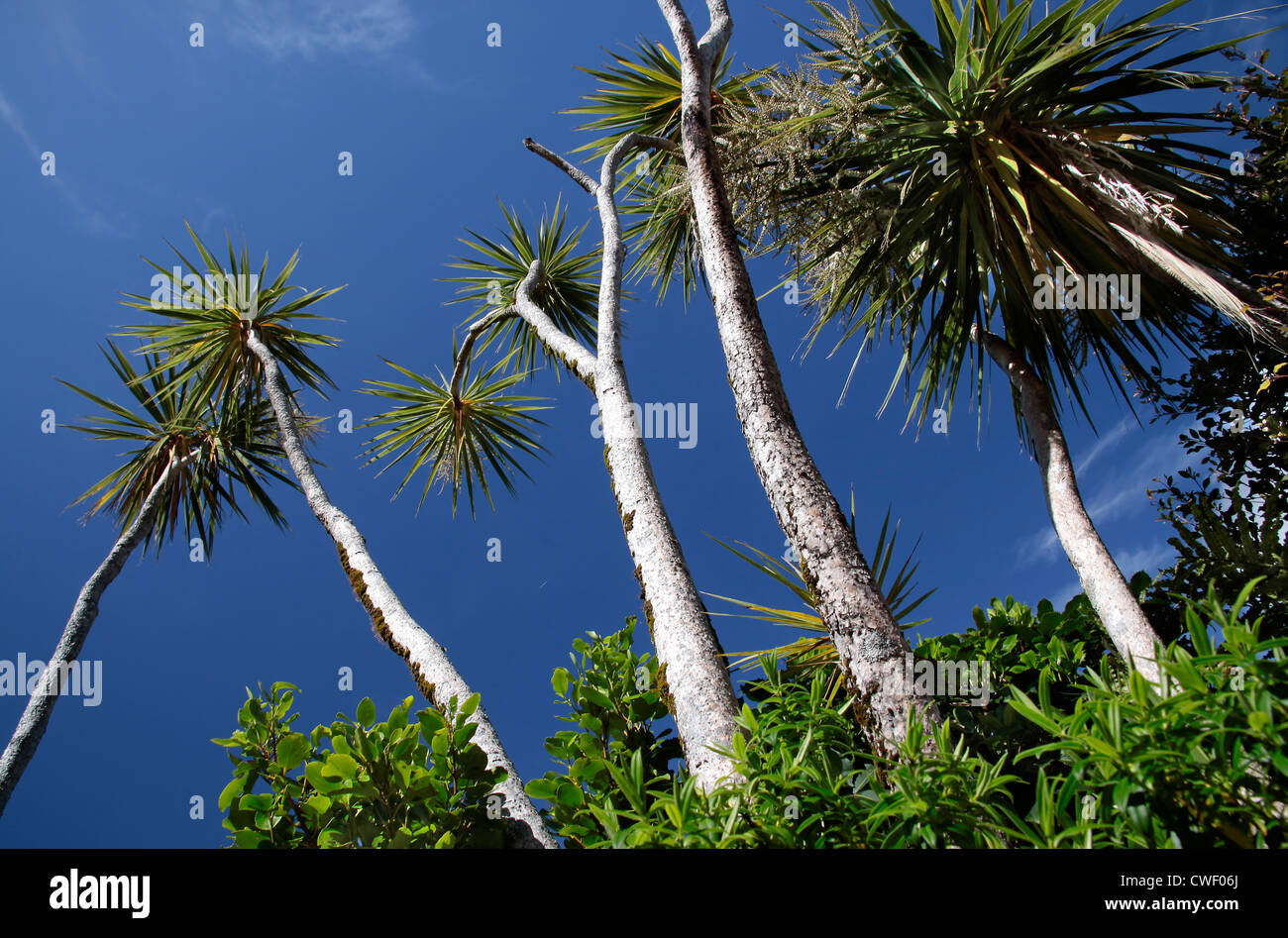new zealand palm tree stock photos new zealand palm tree stock images alamy. Black Bedroom Furniture Sets. Home Design Ideas