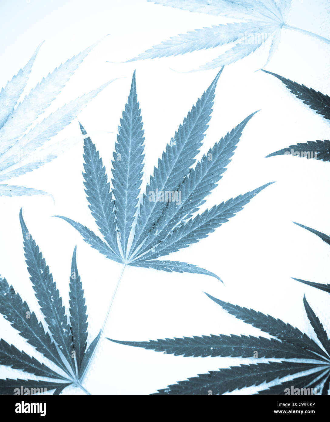 Marijuana - Stock Image