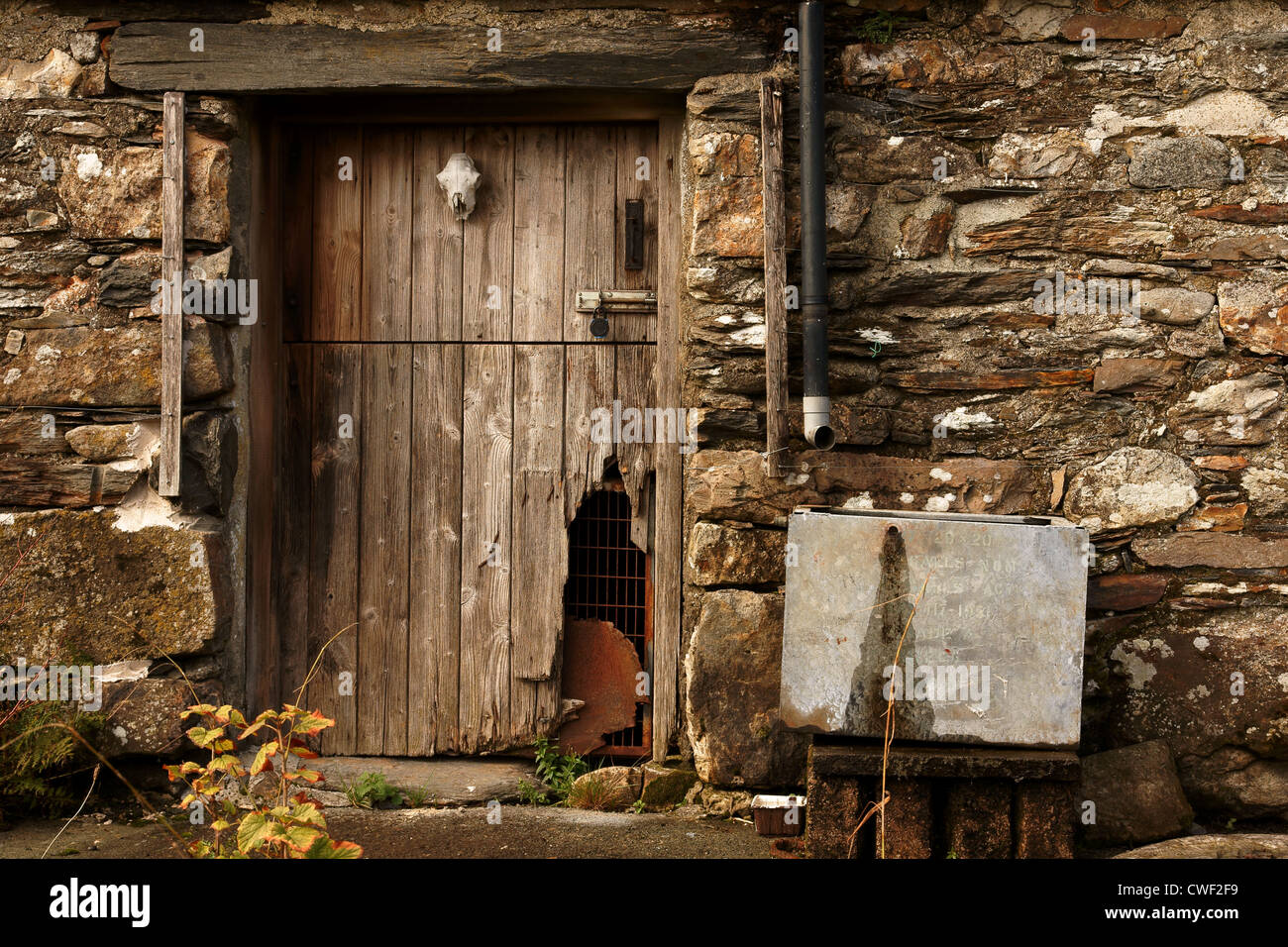 Ordinaire Old Barn Door On An Farm Building Decorated With A Sheep Skull In Rural  North Wales