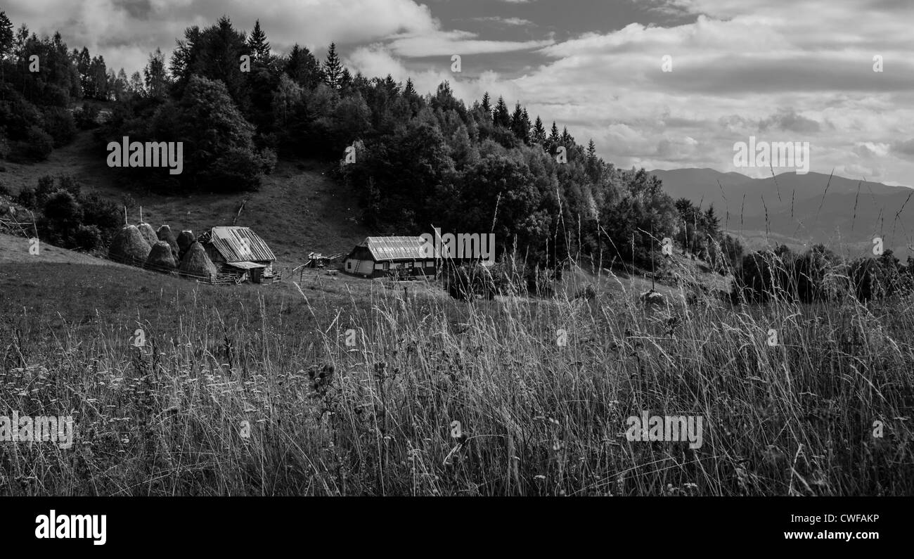 traditional agricultural landscape and practice in the piatra craiului national park, Brasov, Transylvania, Romania - Stock Image