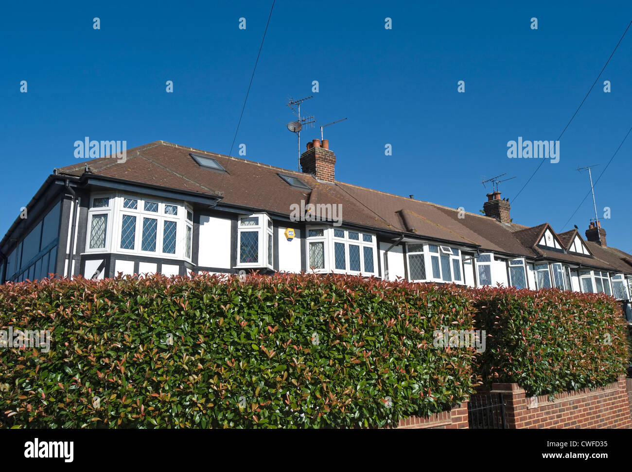 mock tudor houses forming a terrace and seen behind a privet hedge, north kingston, surrey, england - Stock Image