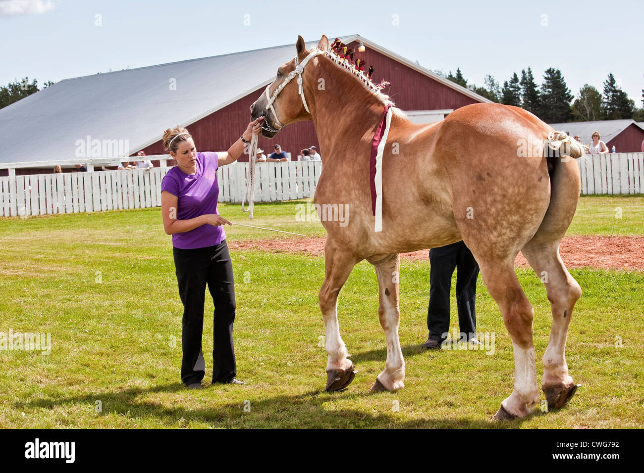Draft horse show at the Provincial Plowing Match and Parade & Agricultural Fair, Dundas, PEI. - Stock Image