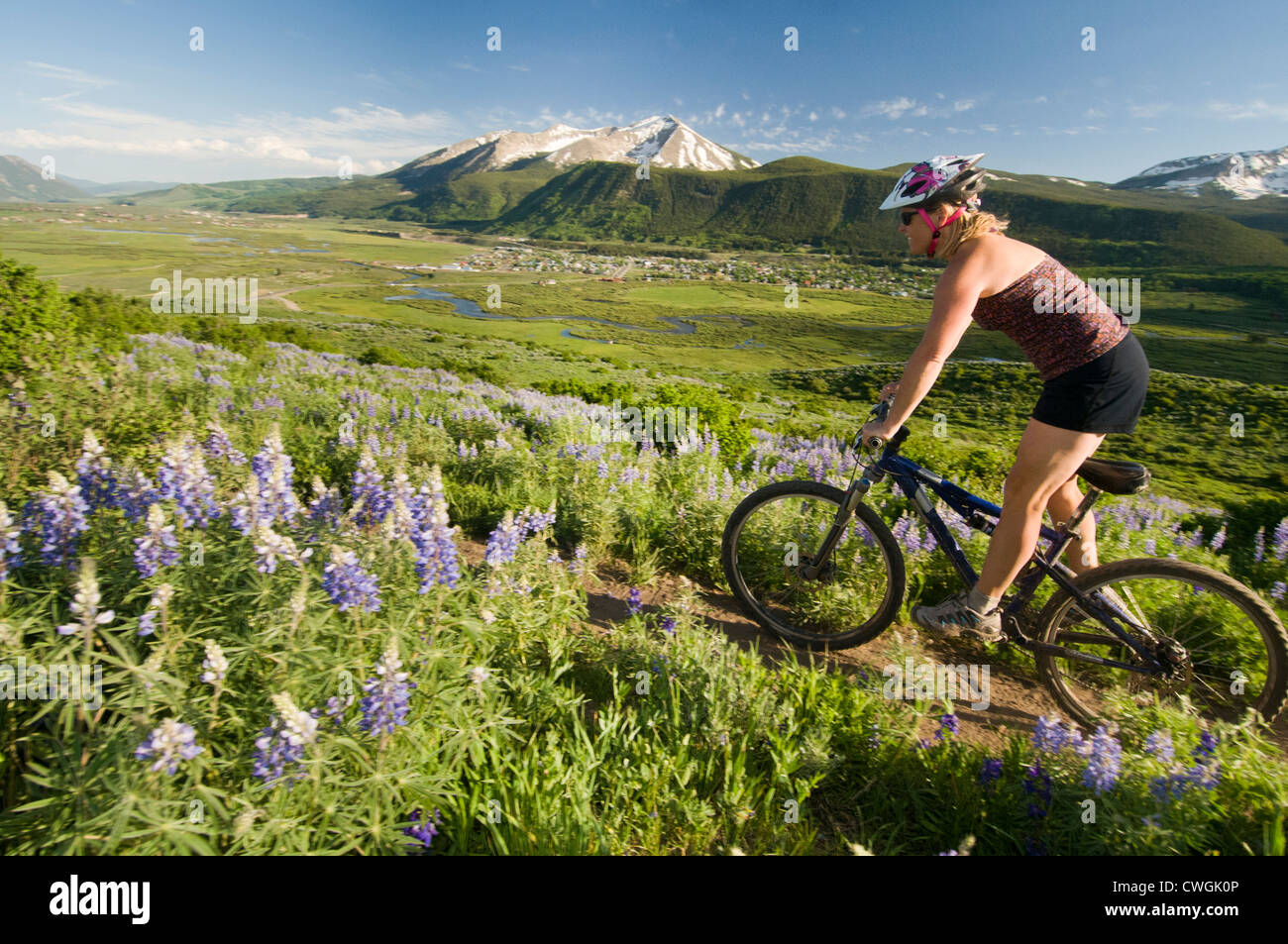 A woman mountain biking past wildflowers in Crested Butte, Colorado. - Stock Image