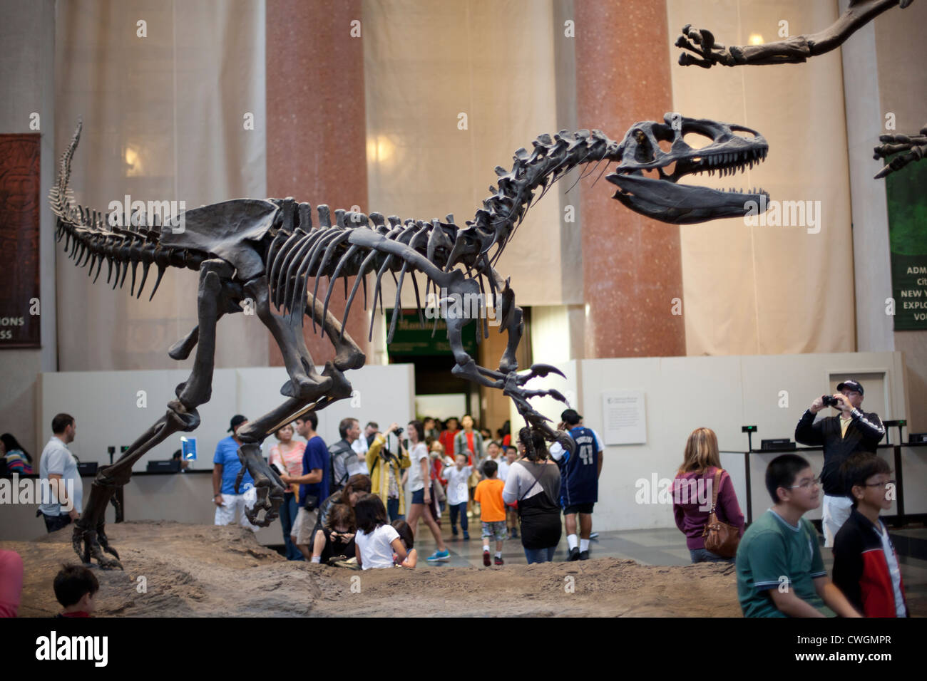 Dinosaurs in the lobby of the American Museum of Natural History - Stock Image