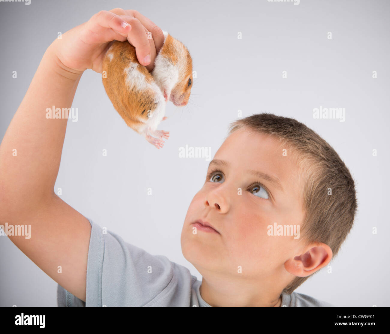 A young six year-old boy playing with his pet Syrian Hamster