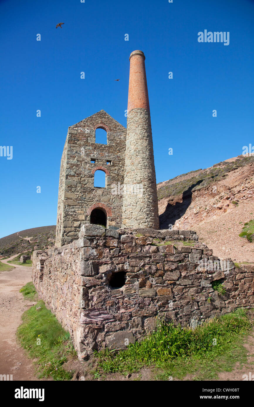 A pair of peregrine falcons soar above Towanroath Engine House, Wheal Coates, St Agnes, Cornwall, UK - Stock Image