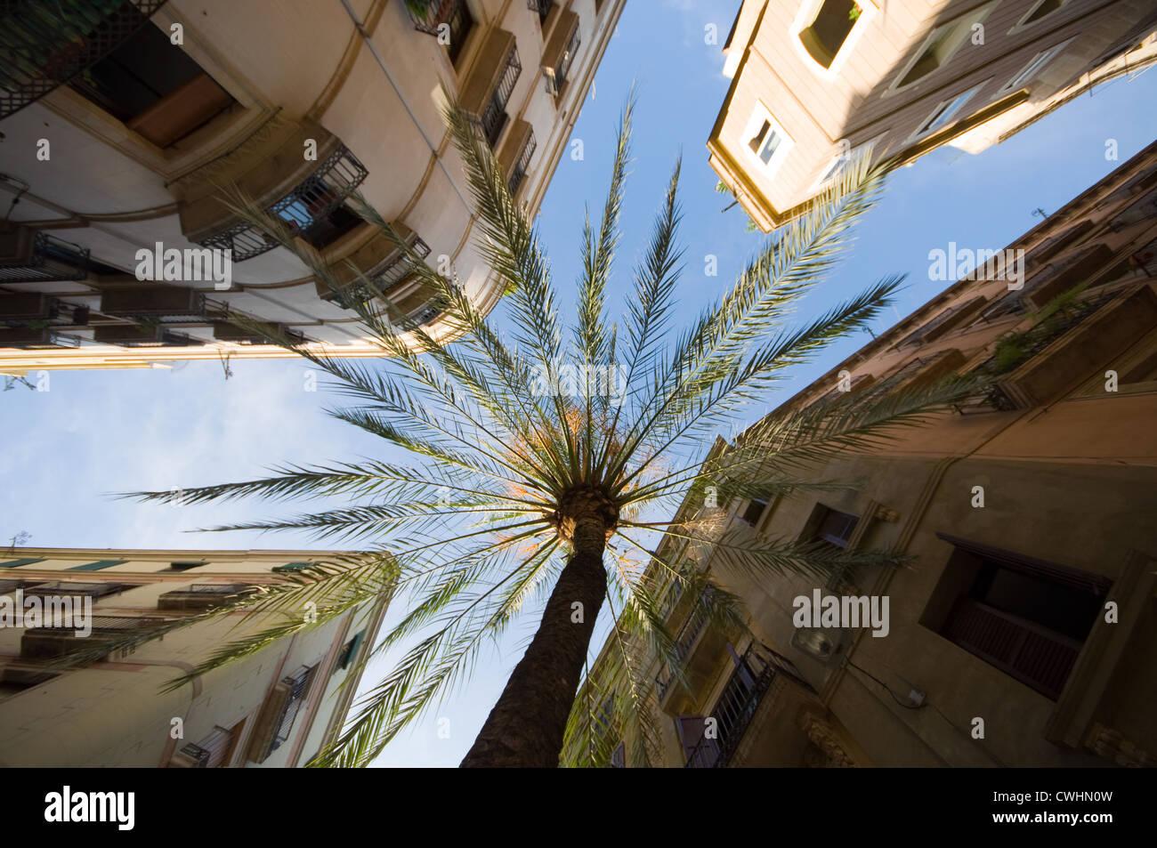 palm tree,barcelona,street canyon - Stock Image