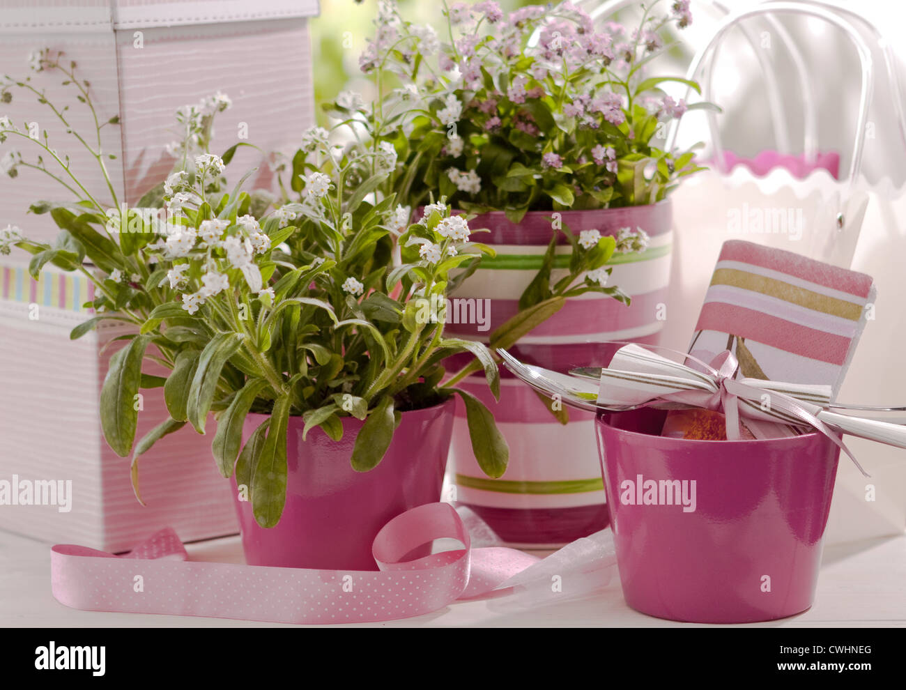 Forget Me Not In Pink Flowerpots Stock Photo 50177192 Alamy