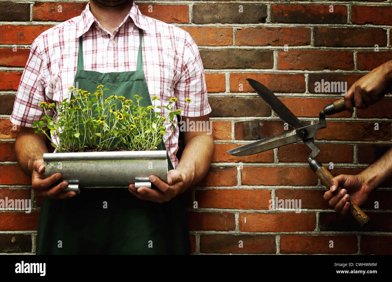gardening,gardener - Stock Image