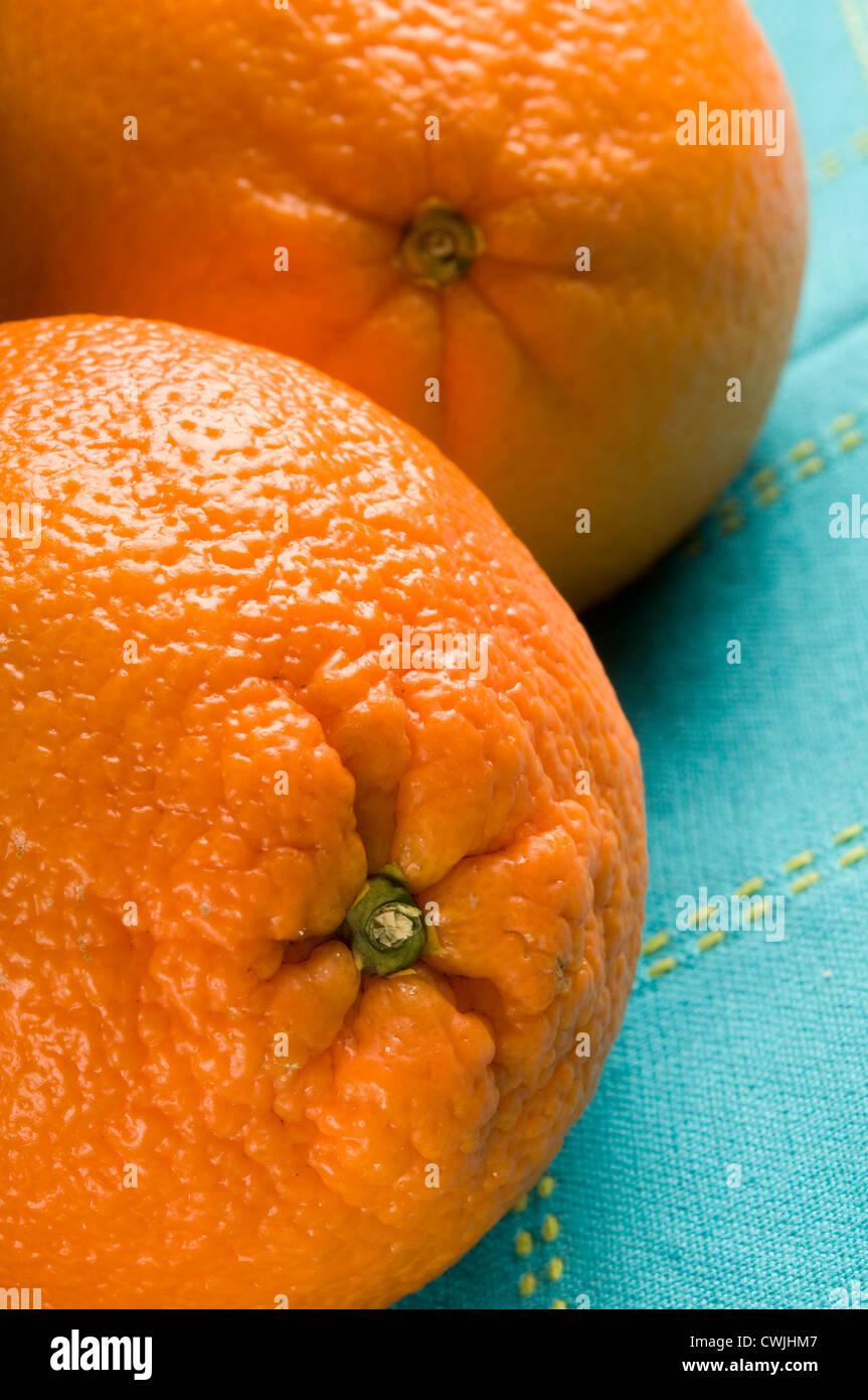 two fresh oranges - Stock Image