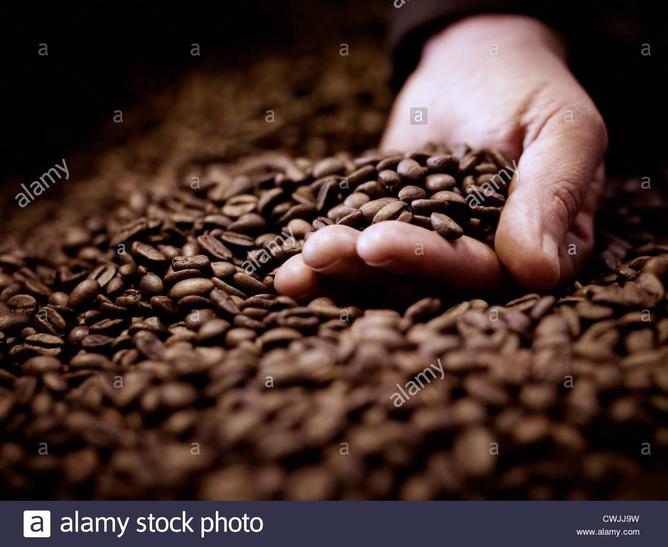Close up of hand cupping coffee beans - Stock Image
