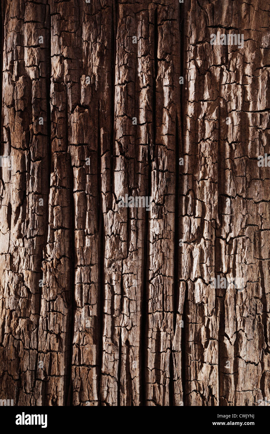 Background texture of old wood from the bottom of the sea. - Stock Image