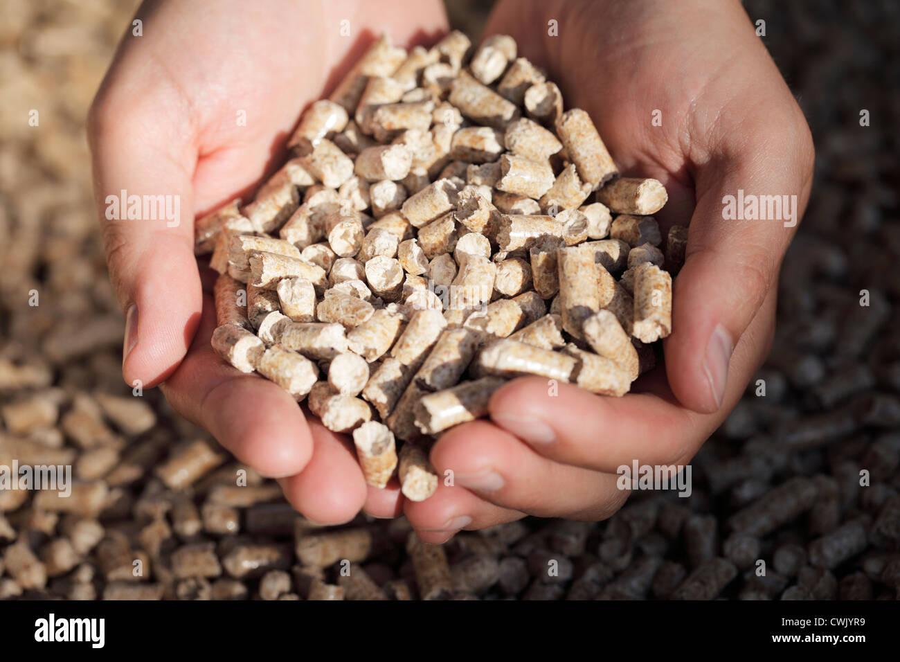 Alternative fuel: Pellets made from industrial wood waste. Short depth-of-field. - Stock Image