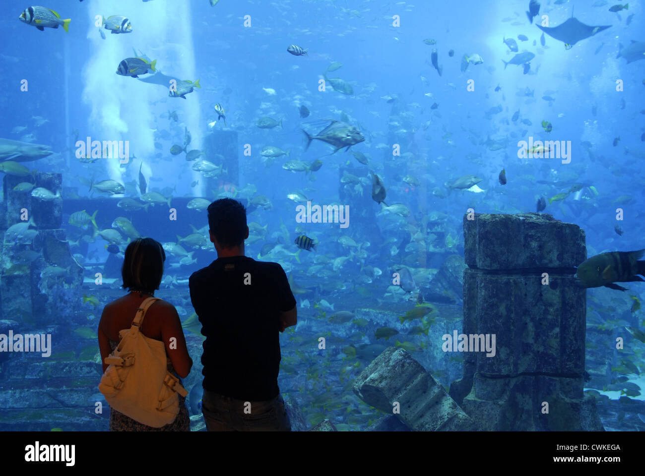 Ambassador Lagoon Aquarium,  Atlantis Hotel, The Palm, Dubai, UAE, United Arab Emirates, Persian Gulf, Arabian Peninsula, - Stock Image
