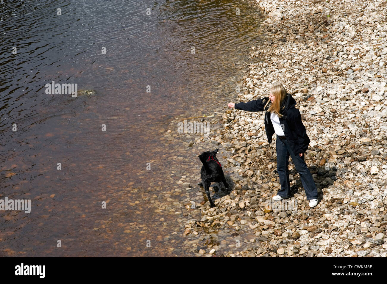 young woman on river bank throwing a stick into the water for her dog to retrieve - Stock Image