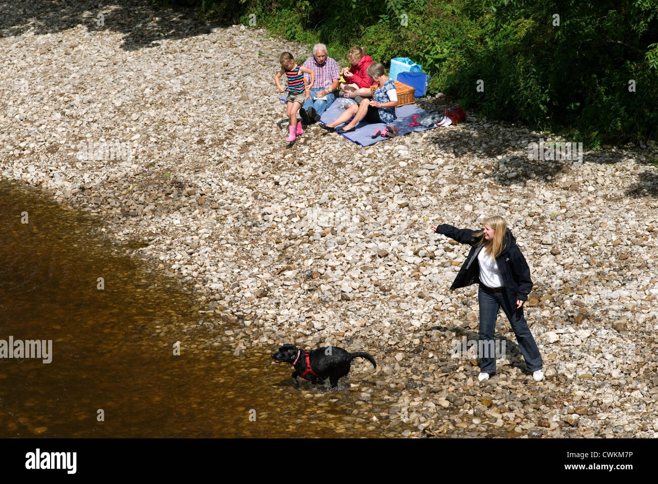 young woman on river bank throwing a stick into the water for her dog to retrieve watched by family having picnic - Stock Image