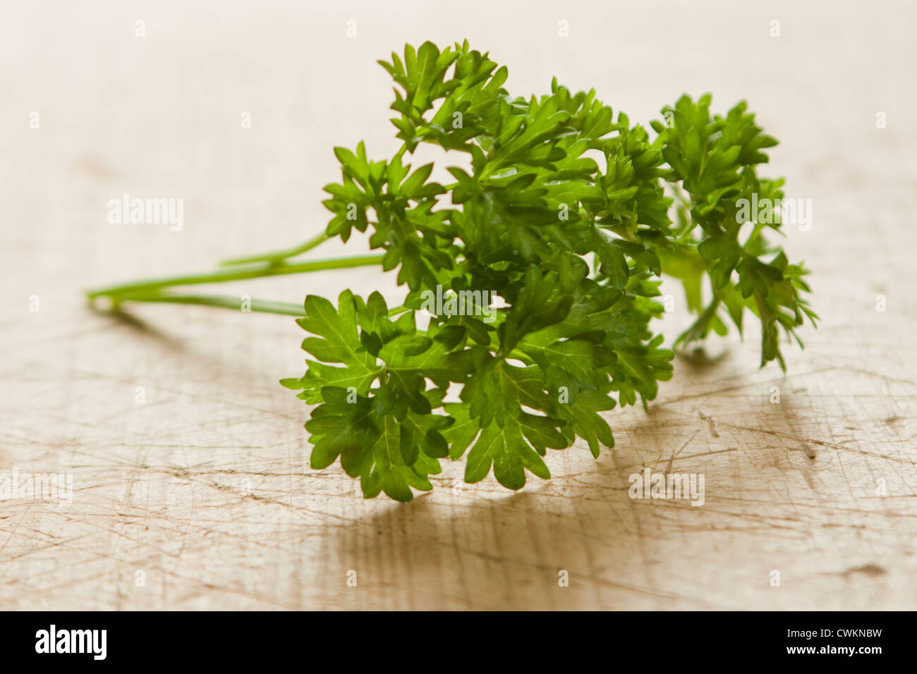 some parsley in the kitchen - Stock Image