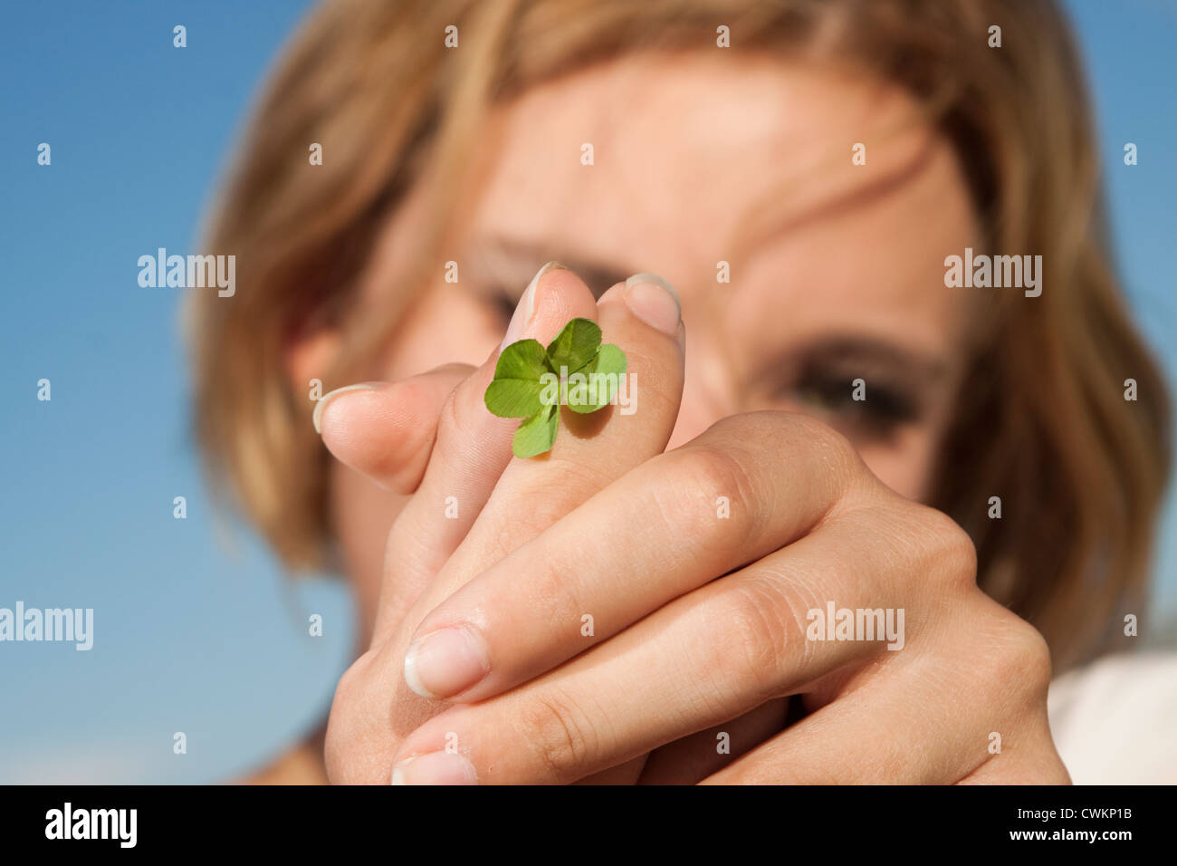 four leafed clover - Stock Image