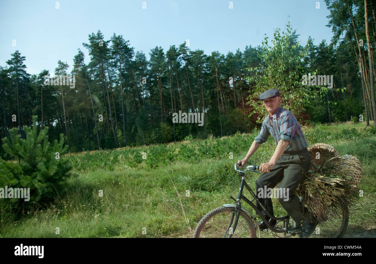 Senior man ridding bicycle carrying a couple of baskets and a load of field sticks. Zawady Central Poland - Stock Image