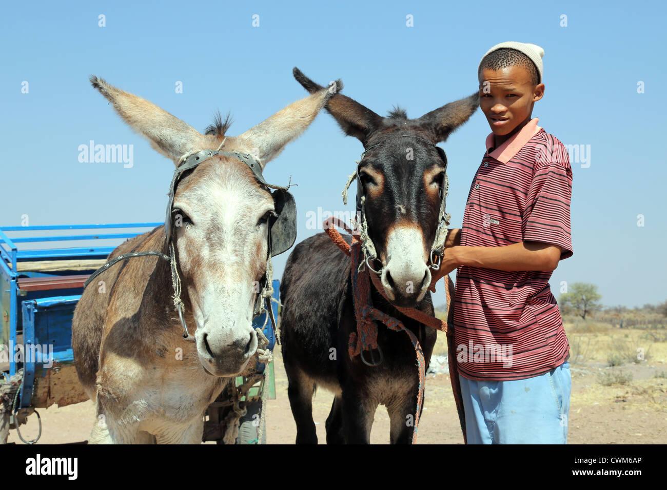 Boy of the indigenous San tribe stretches donkeys to a cart, Namibia, Kalahari desert - Stock Image