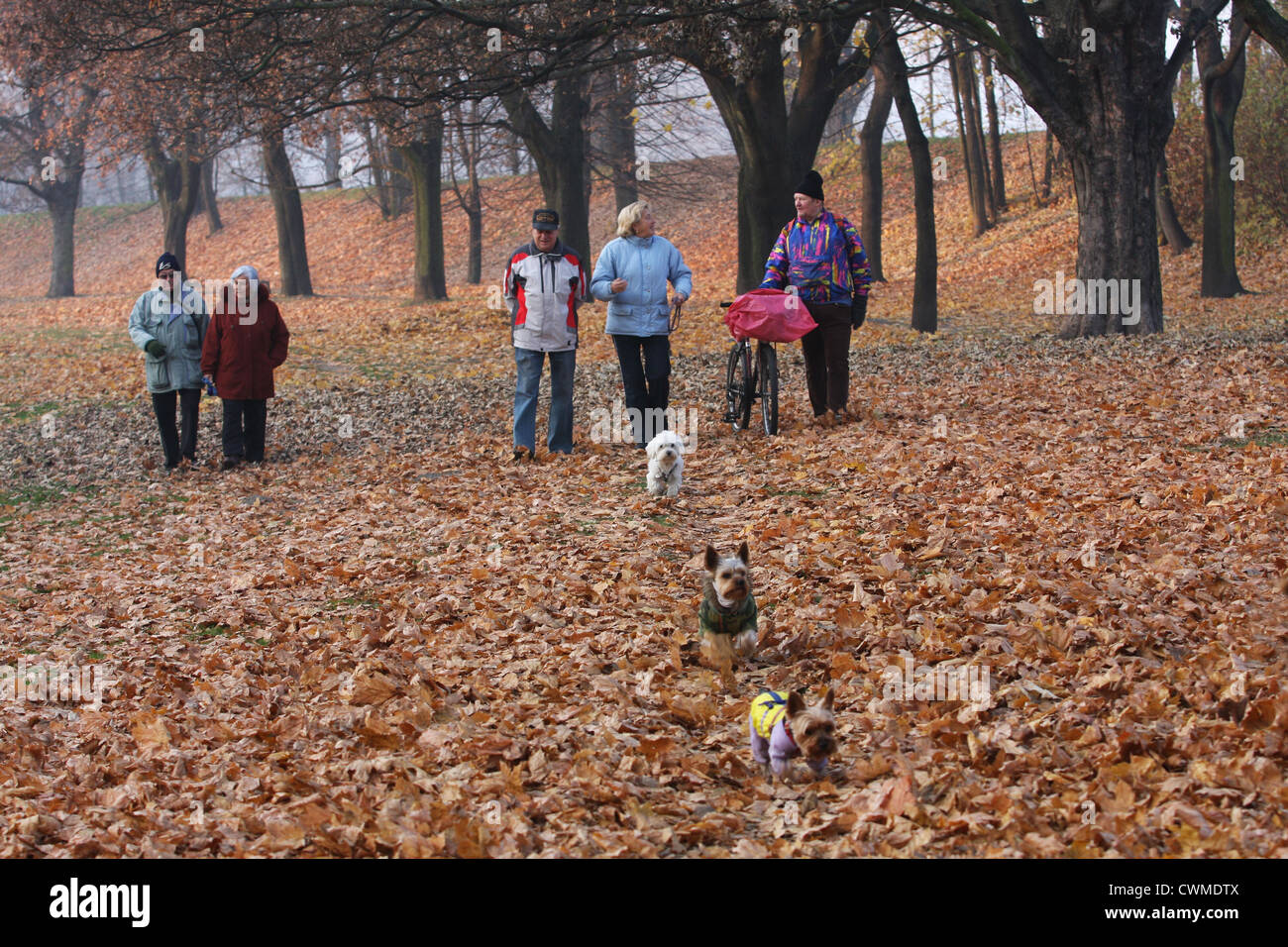 Autumn in Park - Stock Image
