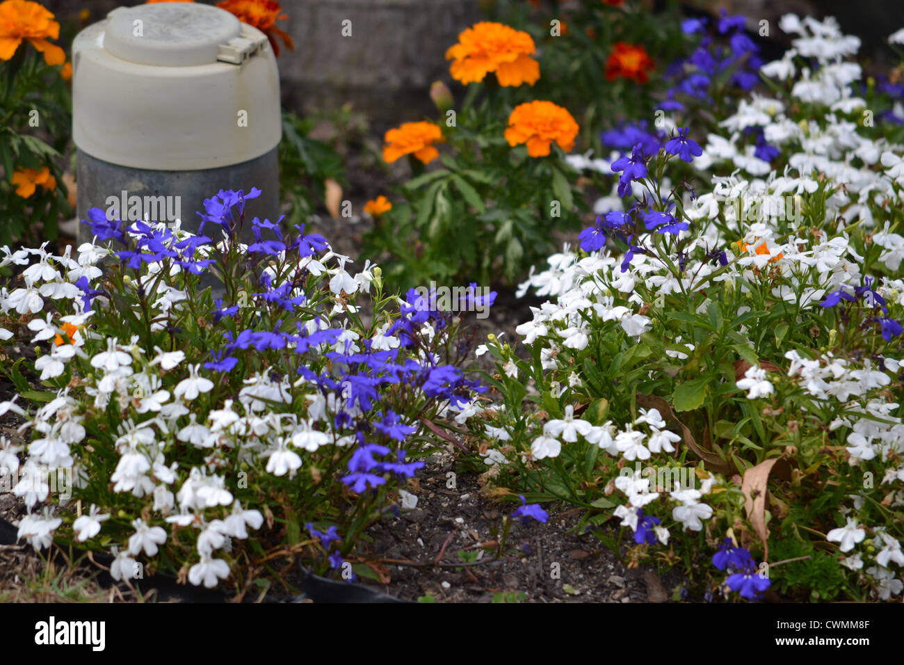 small flower bed surrounding water meter - Stock Image