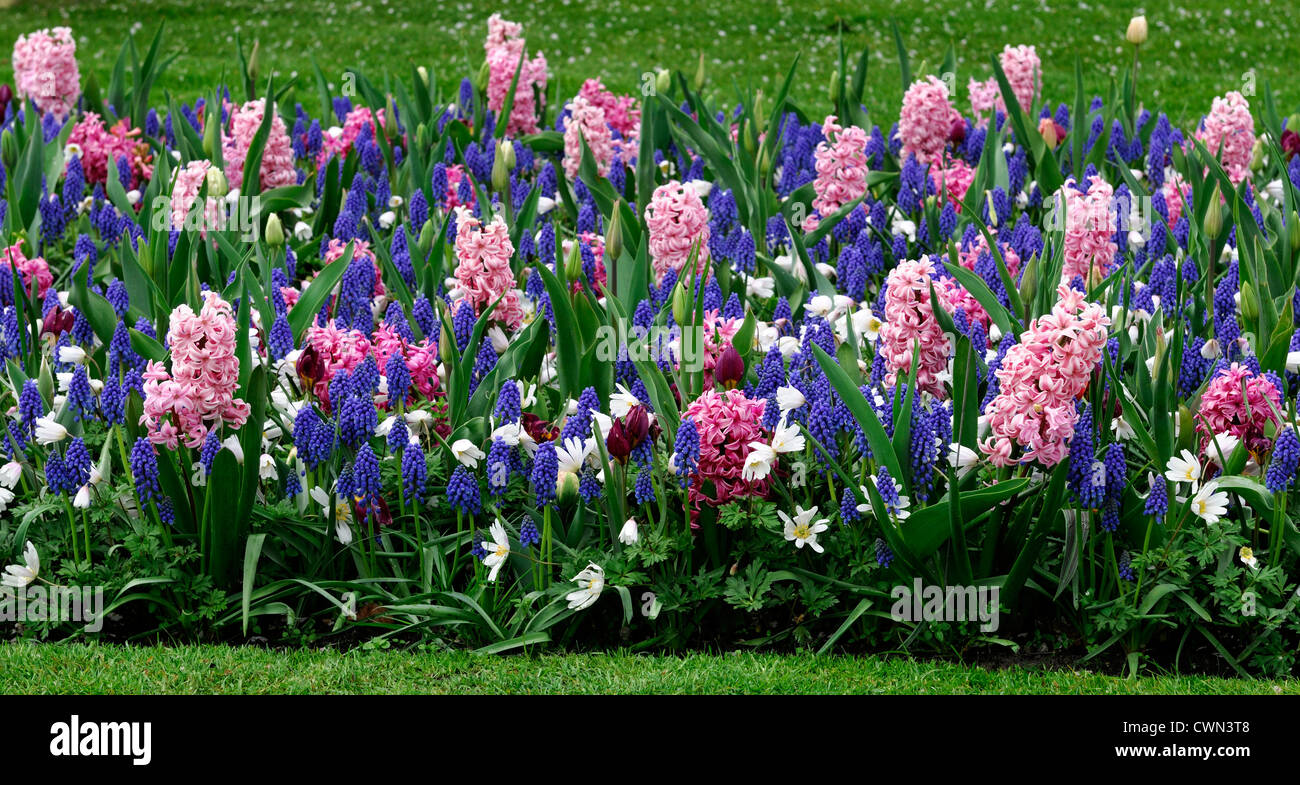 Mixed bed border spring blooming bulbs purple white pink colour mixed bed border spring blooming bulbs purple white pink colour color combo combination mix mixed planting display scheme mightylinksfo