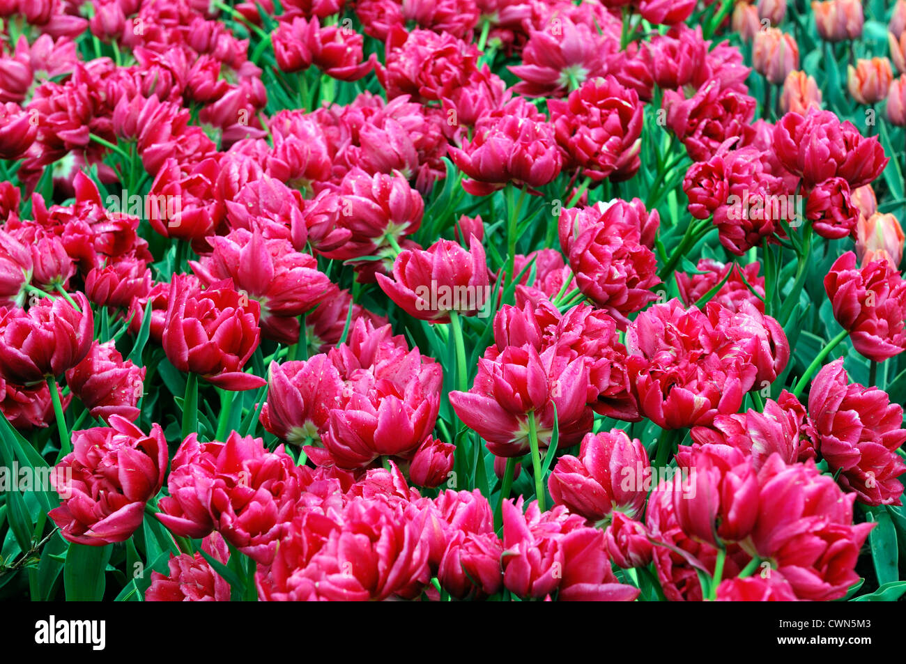 Early Spring Flower Display Stock Photos & Early Spring Flower ...