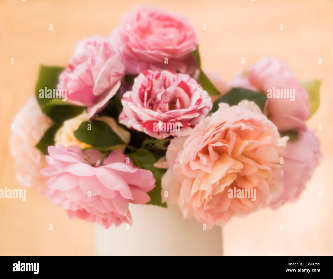 Rose, Rosa, a bunch of pink cut flowers arranged in a white ceramic vase. Stock Photo