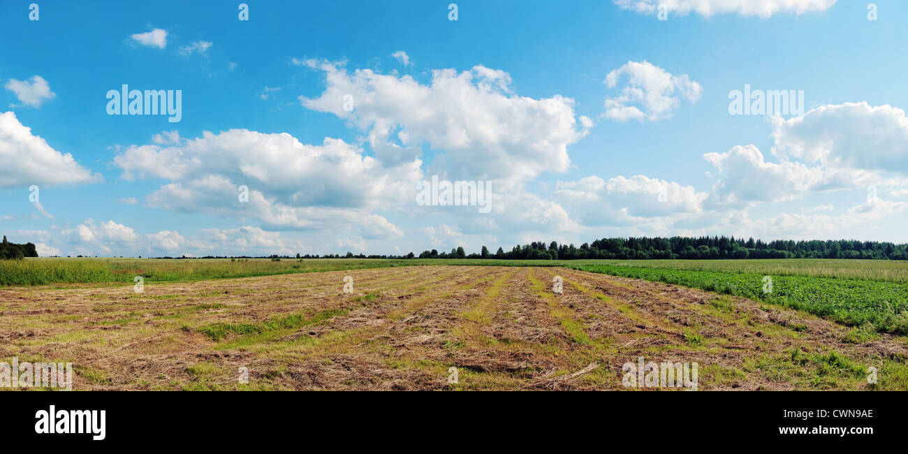 Rows of an oblique grass. - Stock Image